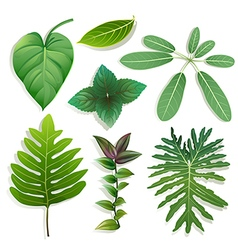 different shape of leaves vector image