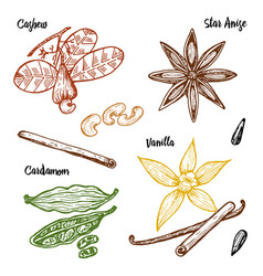 herbs condiments and spices vanilla and cinnamon vector image