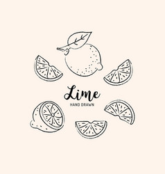 Lime fruit drawing half and slice lemon vector