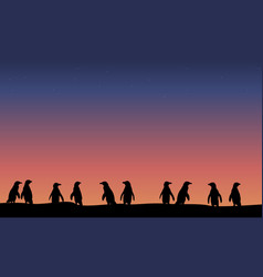 Lined penguin silhouette at night landscape vector
