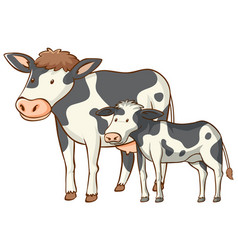 Mother and baby cow animal cartoon on white vector