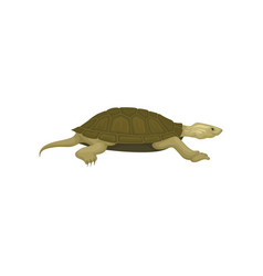 turtle side view tortoise reptile animal vector image