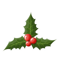 Twig of holly with leaves and berries on white vector