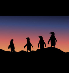 At night penguin scenery of silhouette vector