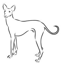 Chippiparai dog sketch contour domestic dog vector