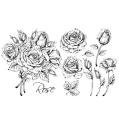 Luxurious rose set vector