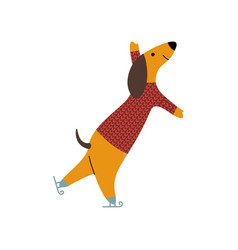 Purebred brown dachshund dog wearing knitted vector
