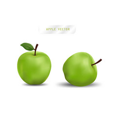 Realistic apple fruit and fresh apple vector