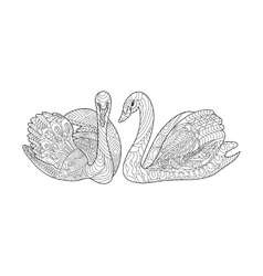 Swans coloring book for adults vector image