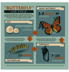 Butterfly is life cycle vector