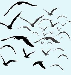 Birds flying in the sky vector image
