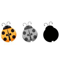 set of ladybug character vector image