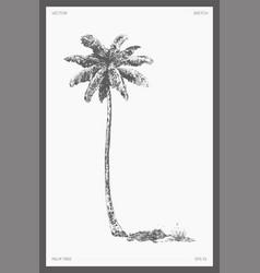High detail palm tree realistic sketch vector
