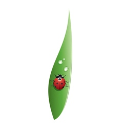 Ladybird on a grass leaf vector