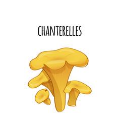 Set of forest chanterelles color vector