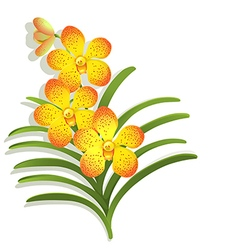 Yellow Vanda Orchid vector image