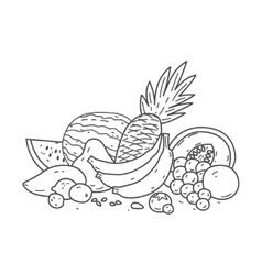 collection fruit vector image