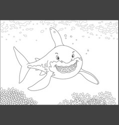 great white shark over a reef vector image
