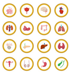 internal organs cartoon icon circle vector image