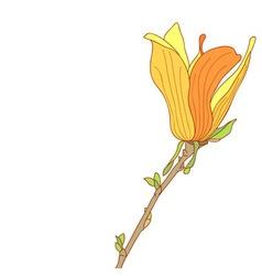 Yellow flower of magnolia soulangeana vector