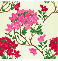 red and pink rhododendron branc vector image