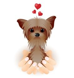 Yorkshire terrier in love vector