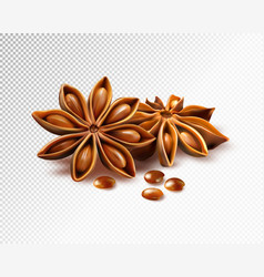 Anise stars isolated on transparent background vector