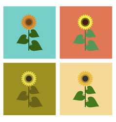 Assembly flat flower sunflower vector