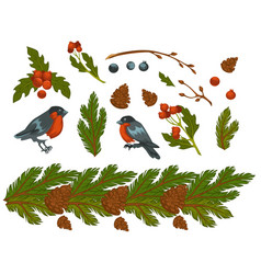bullfinches birds and pine tree branch with cone vector image