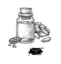 cardamom essential oil bottle and cardamom seeds vector image