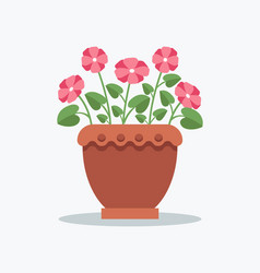 Indoor plant primrose with pink blossom in pot vector