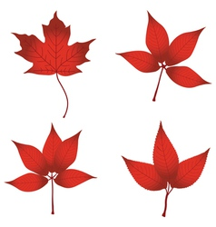 red leaves vector image