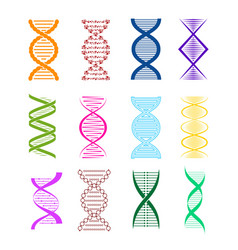 silhouette dna color icon set different types vector image