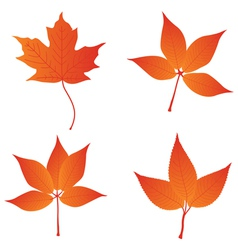 orange leaves vector image