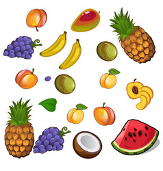 set of appetites tropical fruites vector image