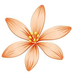A fresh five-petal orange flower vector