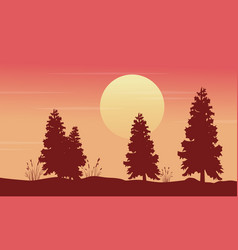 at morning spruce scenery silhouettes vector image