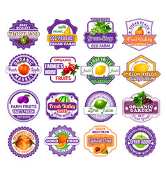 Fruit and berry label for food and drink design vector