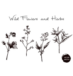 Herb and Wild Flowers vector