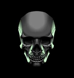 light skull vector image