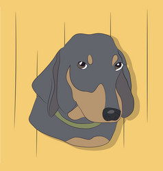 Portrait of a dog dachshund look down vector