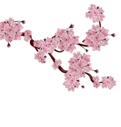 Lush Japanese cherry tree The branch of pink vector image vector image