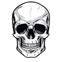 Skull Clipart vector image vector image