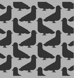 pigeon seamless pattern dove background vector image