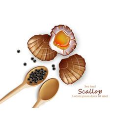 Scallop realistic seafood fresh shellfish vector
