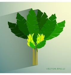 Ecological Concept A Beautiful Tropical Banana vector image vector image