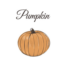 pumpkin is orange vector image vector image