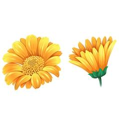 A fresh flower vector