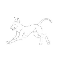 Dog running lines vector