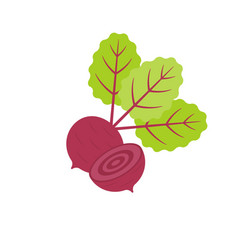 Isolated red beetroot whole vector